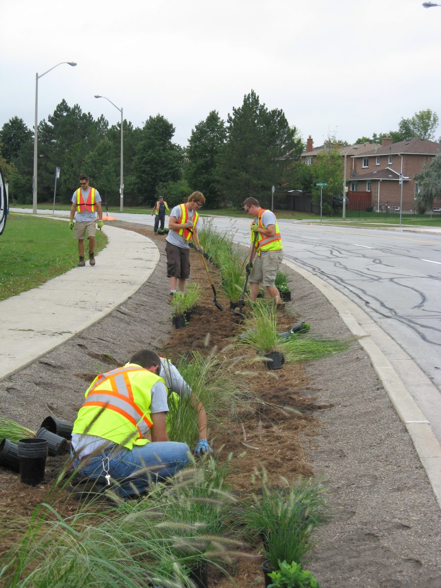 Image showing the planting of the bio-filter swale along the roadside.