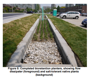 Completed bioretention planters, showing flow dissipater (foreground) and salt-tolerant native plants (background).