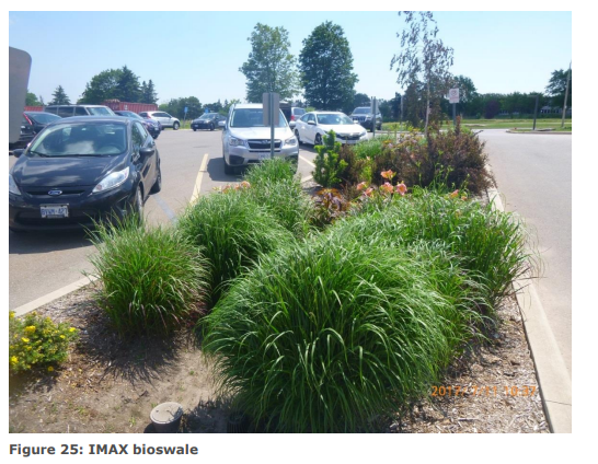 Image of a bioswale in the urban IMAX parking lot. Image of vegetated bioswale integrated into the parking lot design.