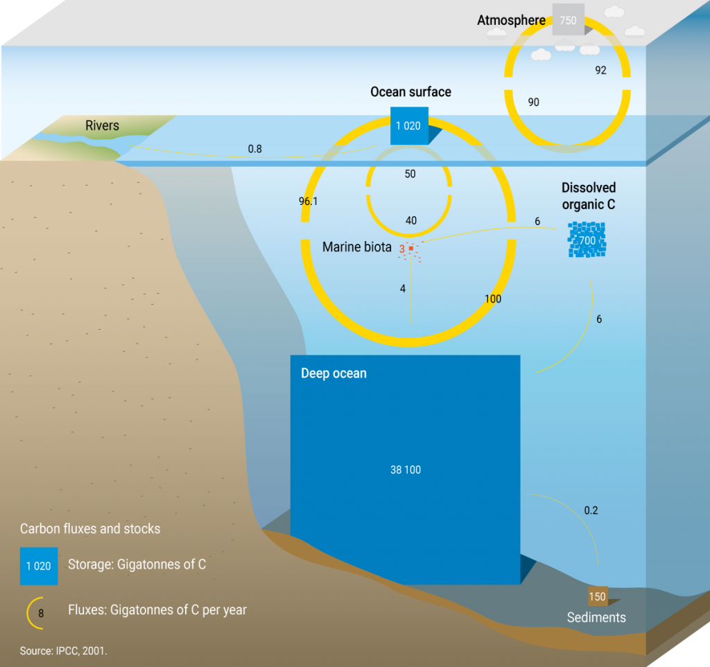 Schematic of the ocean carbon cycle, which includes the annual net transfer of carbon dioxide between the atmosphere and ocean surface. The figure demonstrates that the carbon inventory of the deep ocean is important to the Earth's climate system.