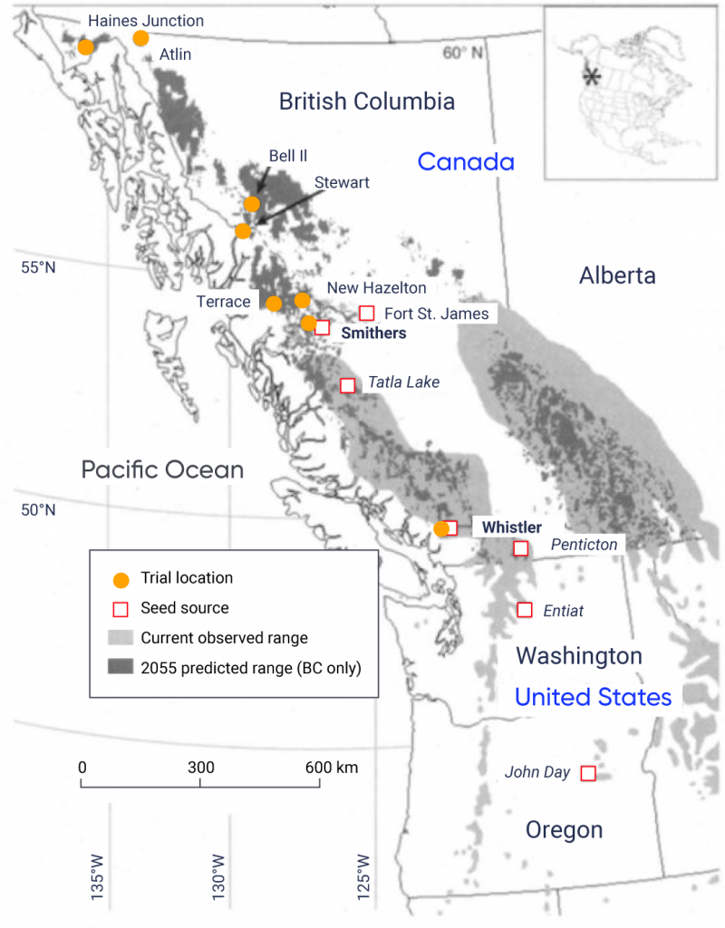 Map of British Columbia, Alberta, Washington, and Oregon showing the current observed range and predicted future range in 2055 for Whitebark Pine. The current observed range spans the interior mountain ranges in British Columbia and Alberta. The 2055 predicted range is much smaller and is shown in the higher-altitude pockets of the current observed range and in new areas in northern British Columbia. Seed sources are shown in John Day, Oregon and Entiat, Washington, as well as in Penticton, Whistler, Tatla Lake, Smithers, and Fort Saint James, British Columbia. Trial locations for the assisted migration experiment are shown in Whistler, Smithers, New Hazelton, Terrace, Stewart, Bell II, Atlin, and Haines Junction, British Columbia.