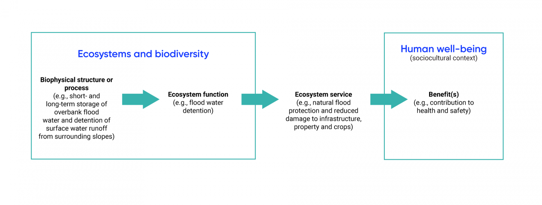 Flow chart diagram displays the link between ecosystems and biodiversity and human well-being. Biophysical structures or processes (e.g., short and long term storage of overbank flood water and detention of surface water runoff from surrounding slopes) provide ecosystem functions (e.g., flood water detention), which produce an ecosystem service (e.g., natural flood protection, reduced damage to infrastructure, property and crops). Ecosystem services then provides benefits to human well-being (for example, by contributing to health and safety).