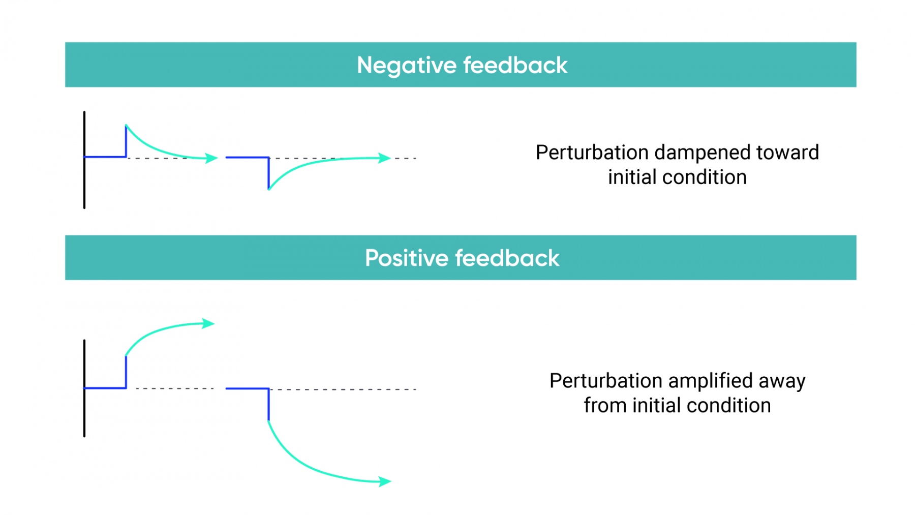 Illustration of negative feedback loop shows perturbation damped toward the initial condition. Illustration of positive feedback loop shows perturbation amplified away from the initial condition.