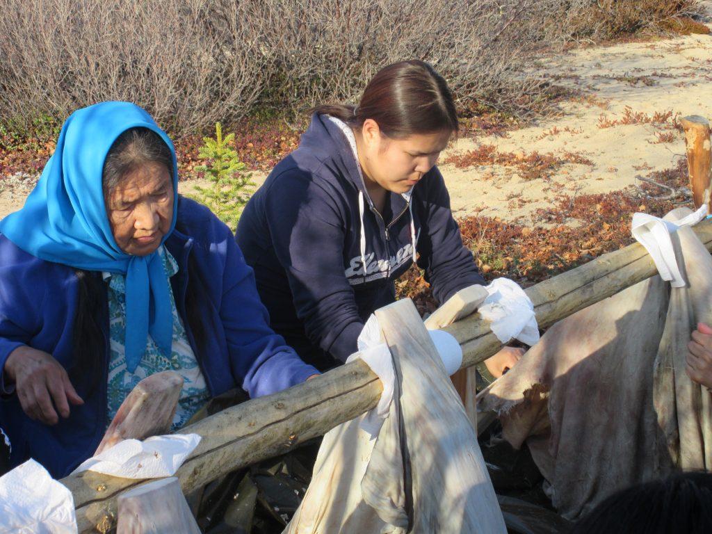 Photographie d'un Aîné de Wekweètı̀ apprenant à un jeune membre de la collectivité à gratter et à tanner les peaux de caribou. Les peaux sont trempées et étirées sur une planche avant d'être grattées à l'aide d'un k'edze, outil fabriqué à partir de l'os de la patte inférieure d'un caribou.