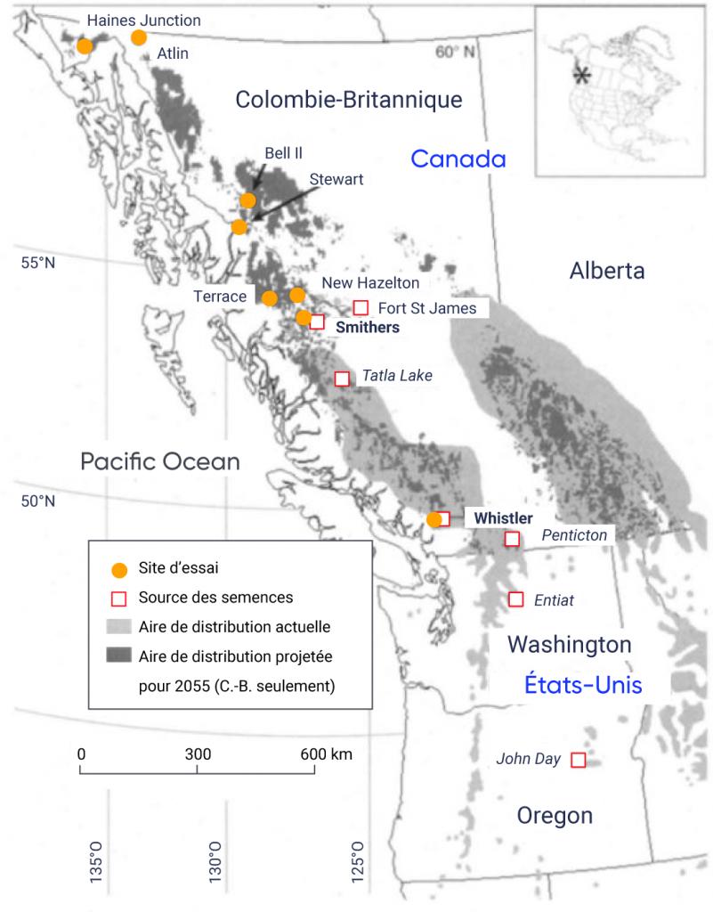 Carte de la Colombie Britannique, de l'Alberta, de l'État de Washington et de l'Oregon montrant l'aire de répartition actuelle observée et l'aire de répartition future prévue en 2055 pour le pin à écorce blanche. L'aire de répartition actuelle observée s'étend sur les chaînes de montagnes intérieures de la Colombie Britannique et de l'Alberta. L'aire de répartition prévue en 2055 est beaucoup plus petite et se manifeste dans les zones de plus haute altitude de l'aire de répartition actuelle observée et dans de nouvelles zones du nord de la Colombie Britannique. Les sources de semences sont indiquées à John Day, en Oregon, et à Entiat, dans l'État de Washington, ainsi qu'à Penticton, Whistler, Tatla Lake, Smithers et Fort Saint James, en Colombie Britannique. Les sites d'essai pour l'expérience de migration assistée sont indiqués à Whistler, Smithers, New Hazelton, Terrace, Stewart, Bell II, Atlin et Haines Junction, en Colombie Britannique.