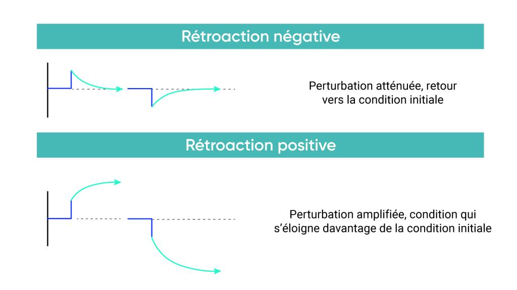 L'illustration de la boucle de rétroaction négative montre une perturbation amortie vers la condition initiale. L'illustration de la boucle de rétroaction positive montre une perturbation amplifiée par rapport à la condition initiale.
